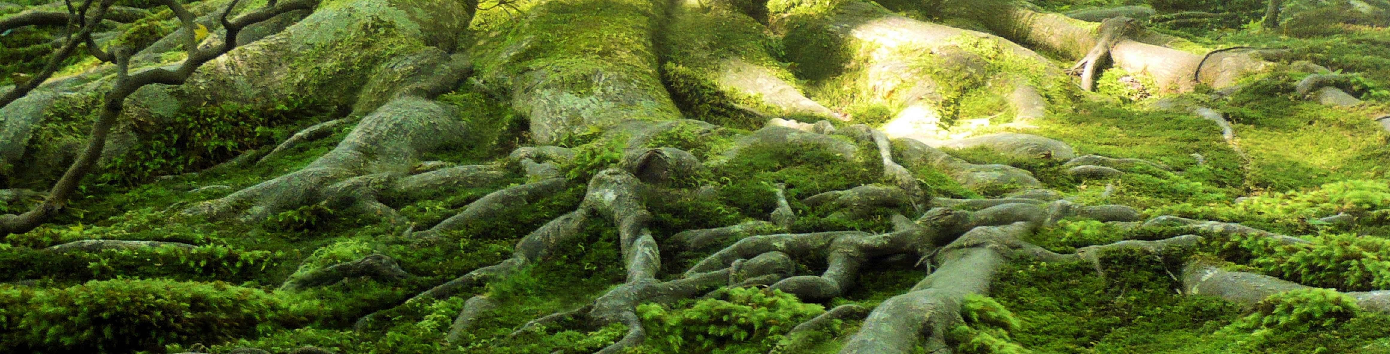 Hier finden Sie 360 Grad Rundgang durch die NaturApotheke